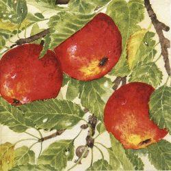 szalvéta  12C_Mona Svard alma