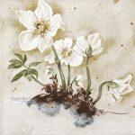 szalvéta  12C_Mona Svard fehér rózsa